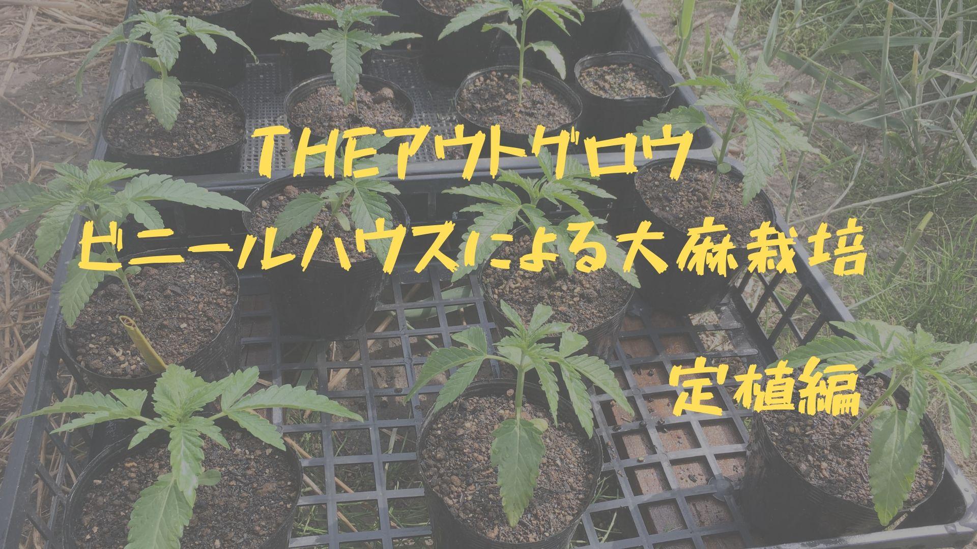 THEアウトグロウ 定植