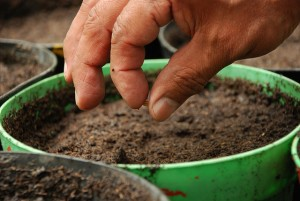 Planting seeds of knowledge