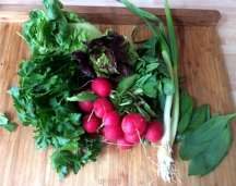 25.3.16 - Rotbarsch,Süßkartoffelpürree,Salat,Petersiliensoße (9)