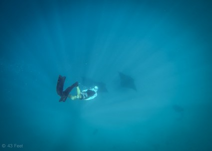 man diving with manta rays, sv cavalo