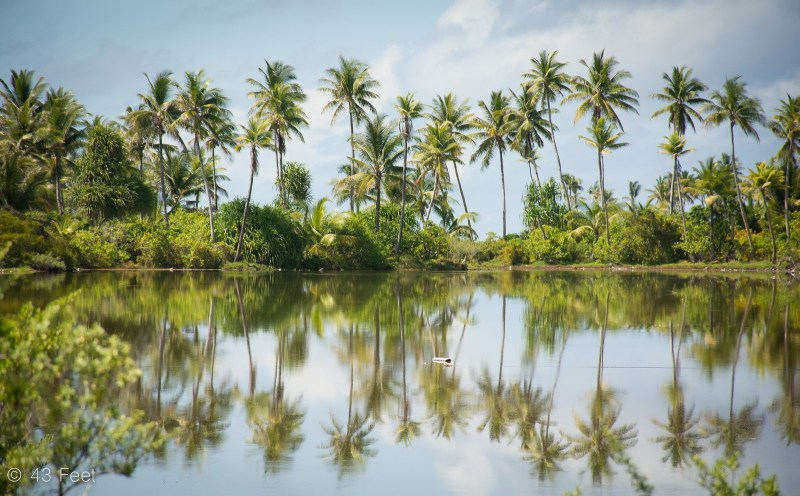 palm tree reflection tarawa kiribati
