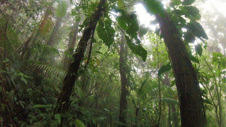 Volcano Jungle