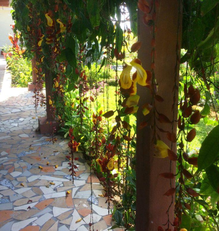 Flowers along the walkway in the Hacienda in Boquete Panama