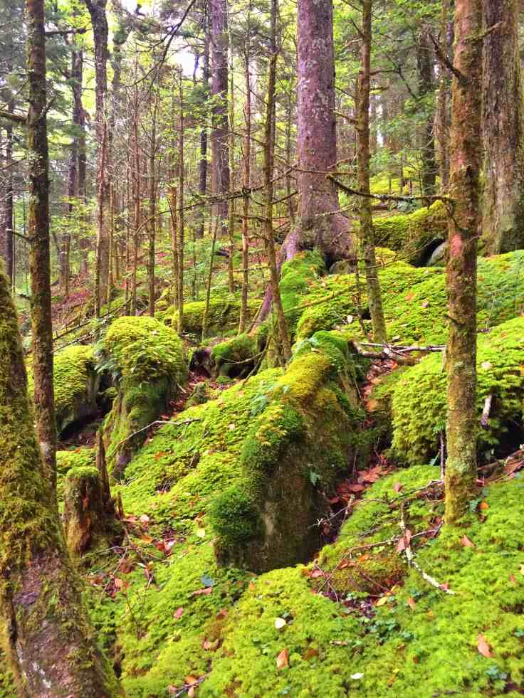 moss in the Great Smoky Mountains