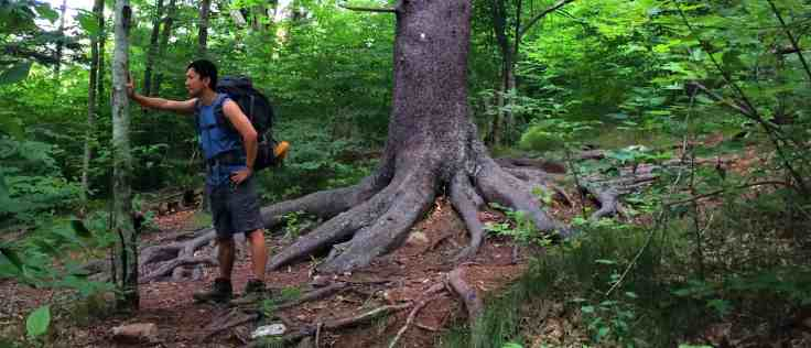 Trin with really cool tree roots in the Great Smoky Mountains