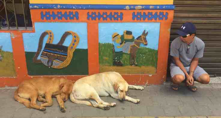 dogs in Guatape Colombia