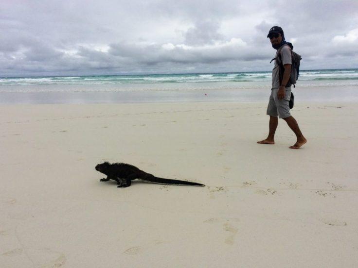Tortuga Bay and Iguana