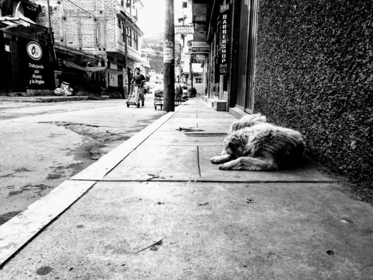 dogs on the street, life on the street