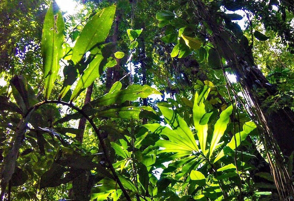 Jungle in Uvita