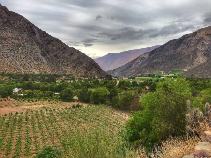 Vineyard in the Elqui Valley
