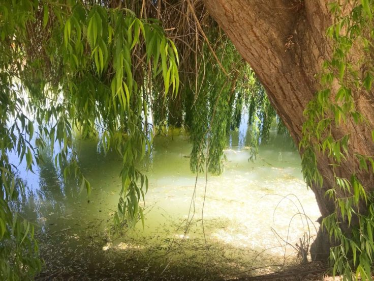 Pond in Elqui Valley