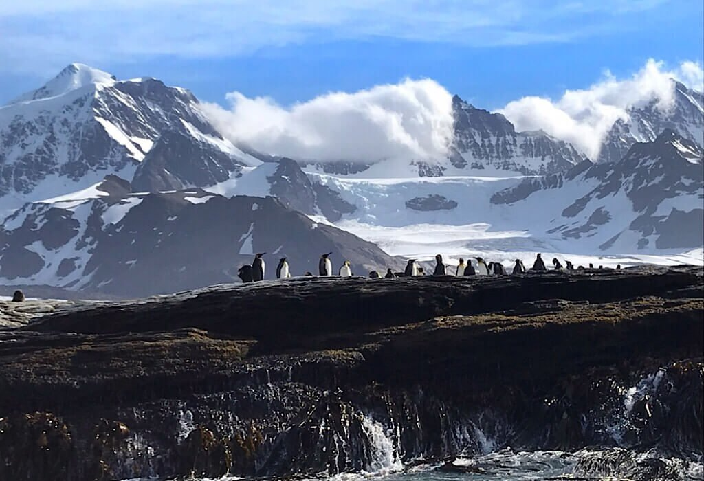Penguins a rock ledge near shore with white capped mountains in the background on St Andrews Bay South Georgia