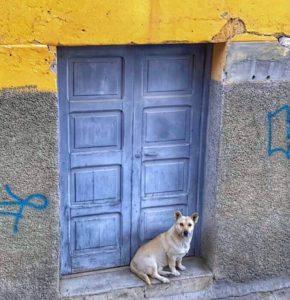 dog in front of a blue door