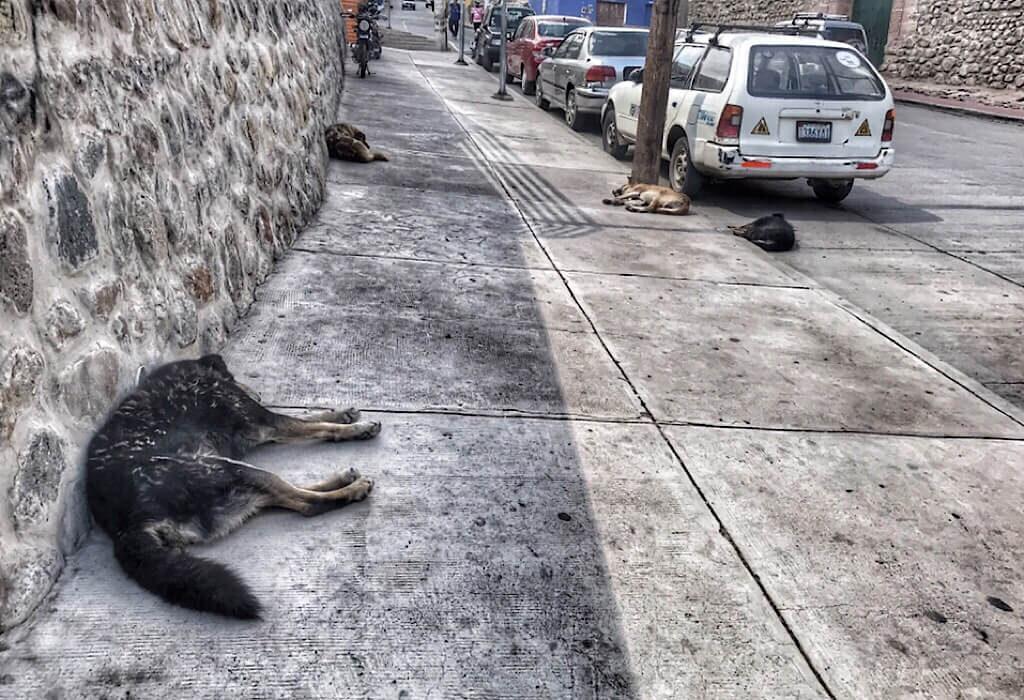 sleeping street dogs