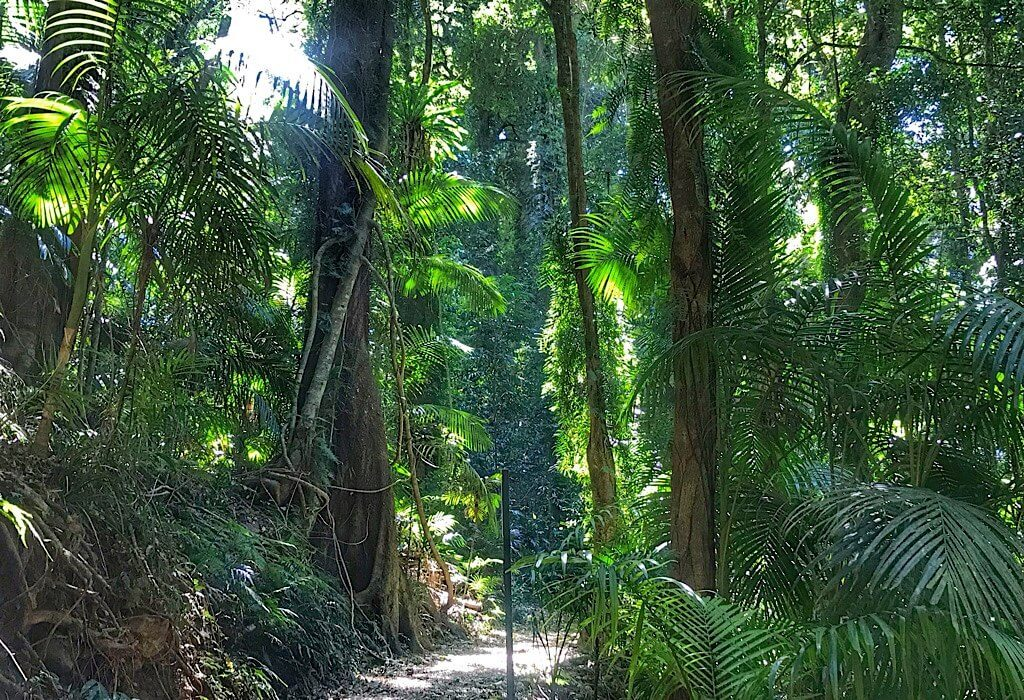 Nature path in the Dorrigo National Park, New South Wales, Australia