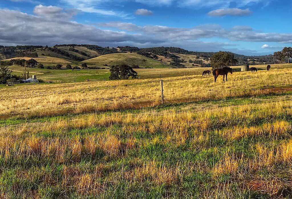 Rolling fields with horses grazing