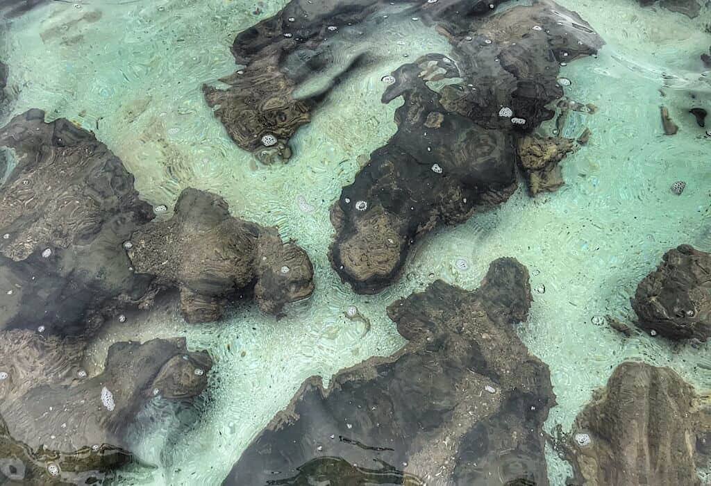 Looking down into the water above stromatolites in Hamlin Pool