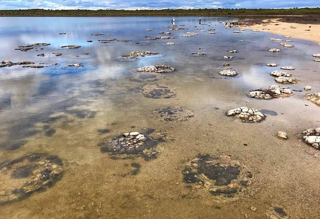 Microbial Jungle at Lake Thetis