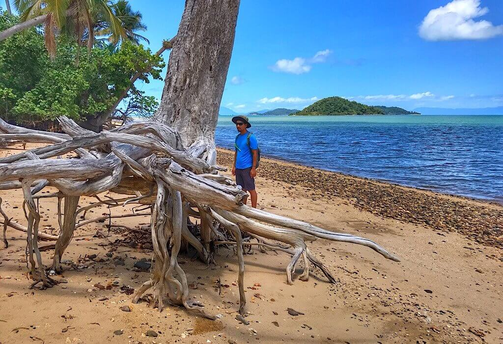Drift wood tree on Dunk Island across from Mission Beach