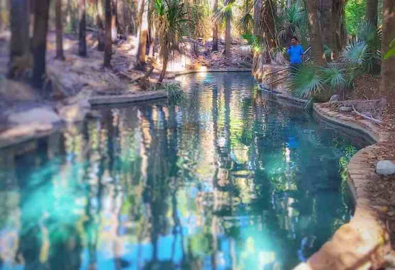 The pool at Mataranka, clear blue water surrounded by palms