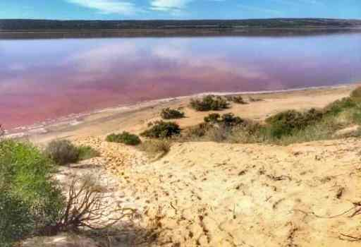 Pink water of the Hutt Lagoon, Western Australia