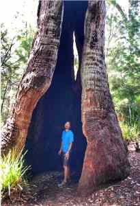 Trin standing inside a burned out Red Tingle - Eucalyptus Jacksonii