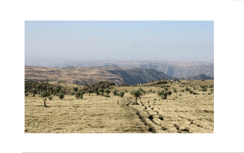 Ethiopia's critical juncture: Ethnic tensions and liberal transition