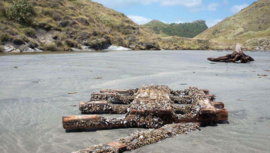 Naomi VanDoren Travel New Zealand day 3-12