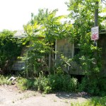 pleas.island.visit2_steveb_465