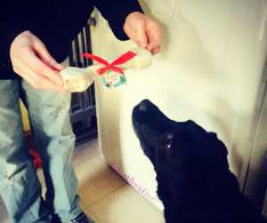 Dog, Labrador, Black Labrador, Christmas, Gifts, Presents, Bones, Blog A Book Etc, Fay