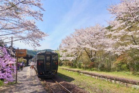 鹿児島県にある嘉例川駅に咲く桜とはやとの風