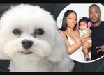 Ray J And His Wife Princess Love Announce $20k Reward To Anyone That Finds Their 3-Year-Old Dog