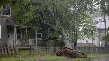 An uprooted tree in Halifax, NS