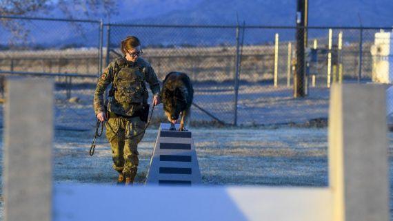 A female dog handler trains a dog