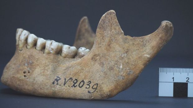 Jawbone of the man