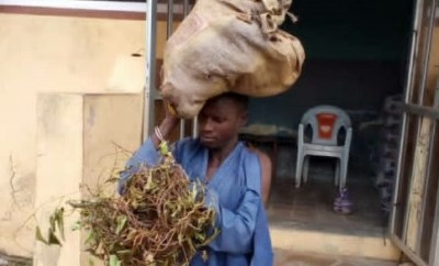 Court sentences man to 6 months imprisonment for stealing tubers of yam in Kwara