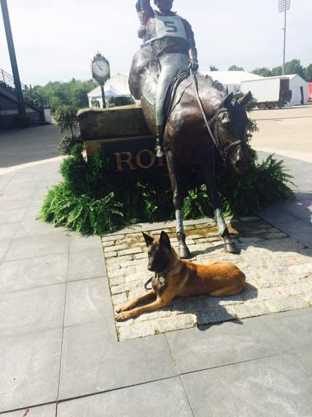 horse park Picture