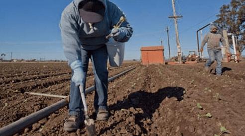 48hillsfarmworkersminwage