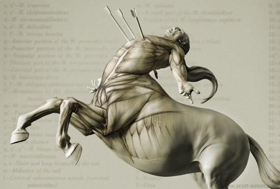 centaur_anatomy