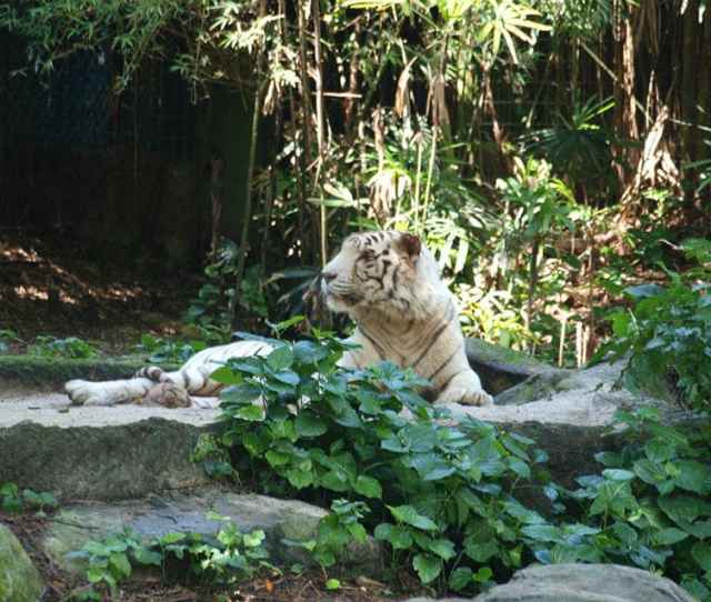 Fun Things You Can Do In Singapore This Weekend Singapore Zoo