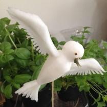 Mooli Bird