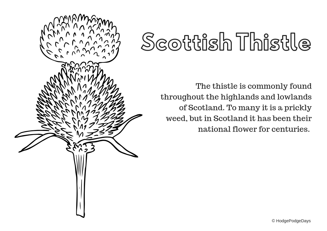 Free Printable Scottish Flag