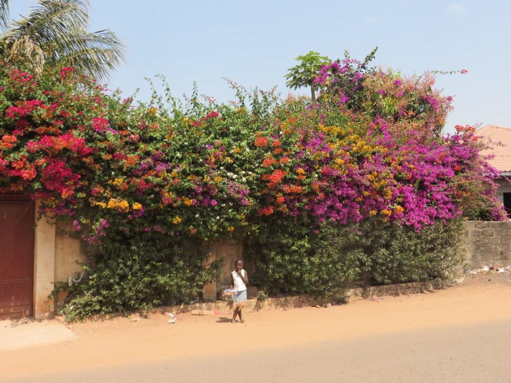 bloemen Gambia