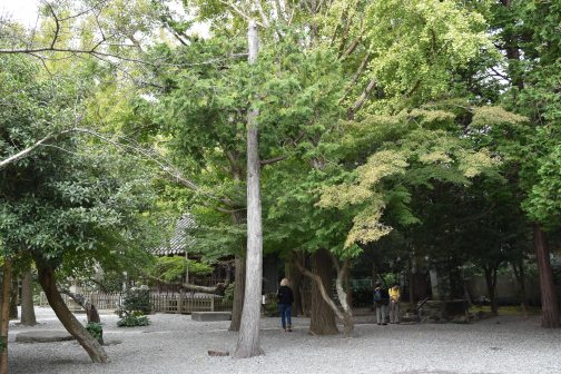 Gardens of Kōtoku-in