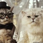 funny cats wedding wallpaper