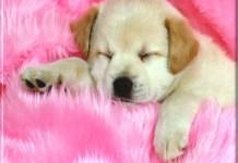 pet animal dog wallpapers