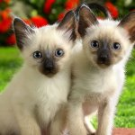 two cats hd wallpaper