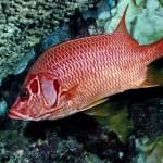 Red Fish HD Wallpaper