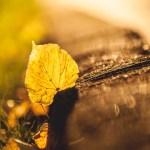Nature leaf HD Pics