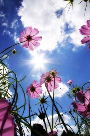 beautiful flowers wallpapers for mobile free download